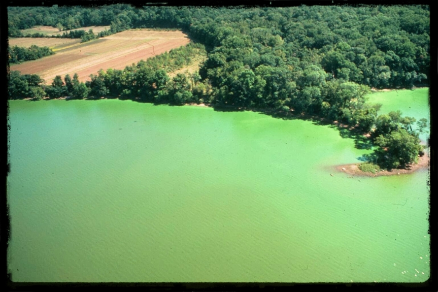 eutrophication, choking the life out of a body of water near you?