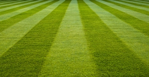 PerfectLawnLines1