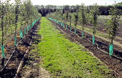 drip-irrigation-system-for-trees-2