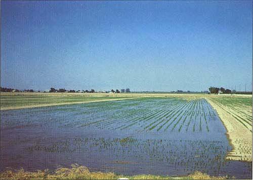 irrigation-9