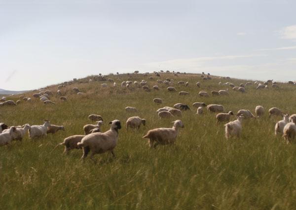 mongolian-grasslands