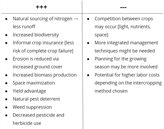pros and cons of intercropping