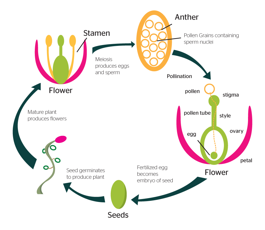 Different sexual propagation