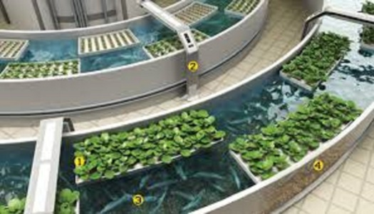 aquaponic merry-grow-round